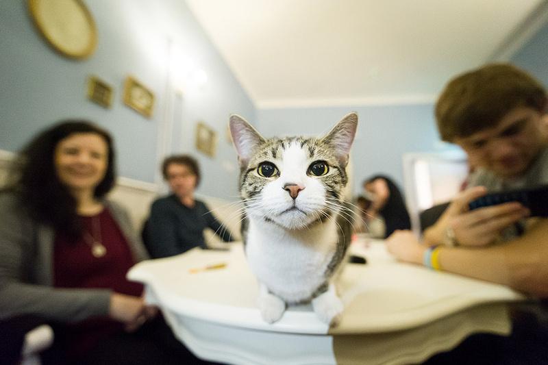 Cat Cafe-6