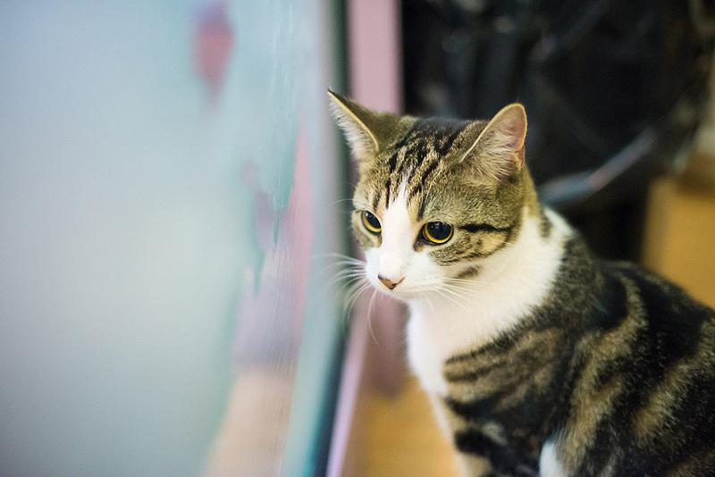 Cat Cafe-29